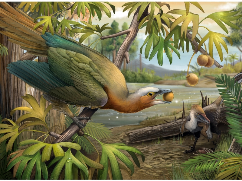 Scientists find clues to how prehistoric birds survived mass extinction